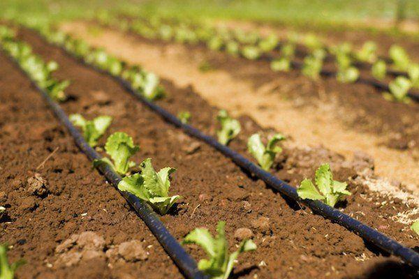 El panorama de la irrigación en España 16