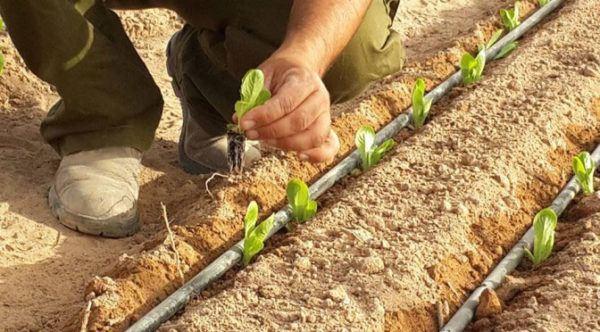 La irrigación