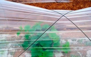 portada plasticos agriculltura 320x202 - Utilización del plástico en agricultura