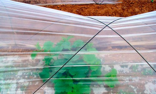 Utilización del plástico en agricultura 1