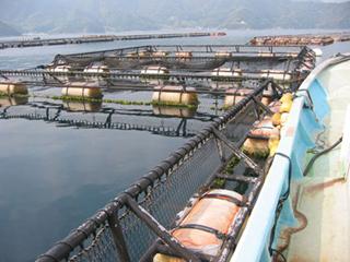 Polietileno de alta densidad (HDPE) en la construcción de piscifactorías 3