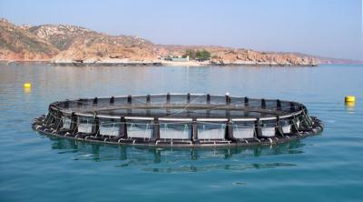 Polietileno de alta densidad (HDPE) en la construcción de piscifactorías 6